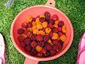 Bowl of salmonberries.jpg