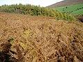 Bracken-covered hillside - geograph.org.uk - 269172.jpg