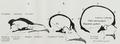 Braus 1921 327.png