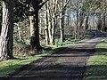Bridgend Woods - geograph.org.uk - 1192847.jpg