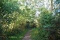 Bridleway to Haysden - geograph.org.uk - 2047131.jpg