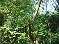 Bromélia e flores vermelhas.jpg