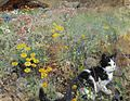 Bruno Liljefors - Cat on flowerbed 1887.jpg