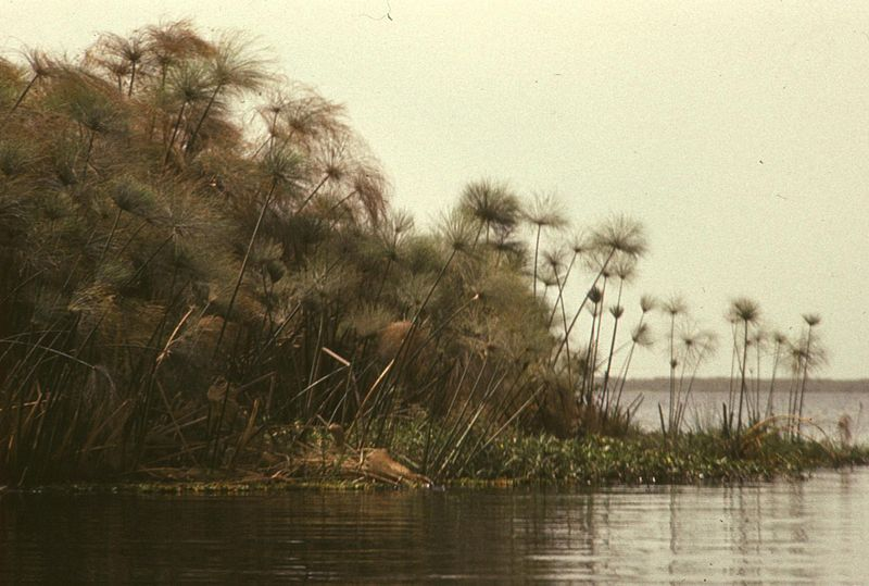 File:Brzeg jeziora - Jezioro Czad - 001265s.jpg