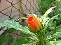 Bunga (ntah ler).jpg