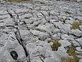 Burren Lime 02 (3586485304).jpg