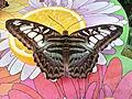 Butterfly 10.jpg