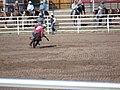 CFD Tie-down roping Ryan Watkins -1.jpg