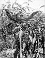 COLLECTIE TROPENMUSEUM Aanplant van spaanse pepers (Capsicum) met een stuk kokosboombast op een stokje om de goede geesten aan te geven hoe groot ze de vruchtjes moeten maken TMnr 10012376.jpg