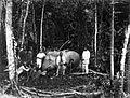 COLLECTIE TROPENMUSEUM Groepsportret bij een tijdens de jacht geschoten olifant Serdang TMnr 60038097.jpg