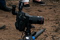 Canon EOS 5D with macro lens and angle-finder eyepiece, ground-level tripod.jpg