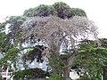 Carnac 2008 PD 13.JPG