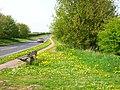 Carpet of dandelions - geograph.org.uk - 167543.jpg