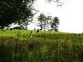 Cattle grazing in sloping field - geograph.org.uk - 887737.jpg