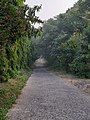 Cemented path covered with mid-size trees.jpg