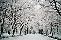 Central Park walkway under snow, NYC, February 2010.jpg