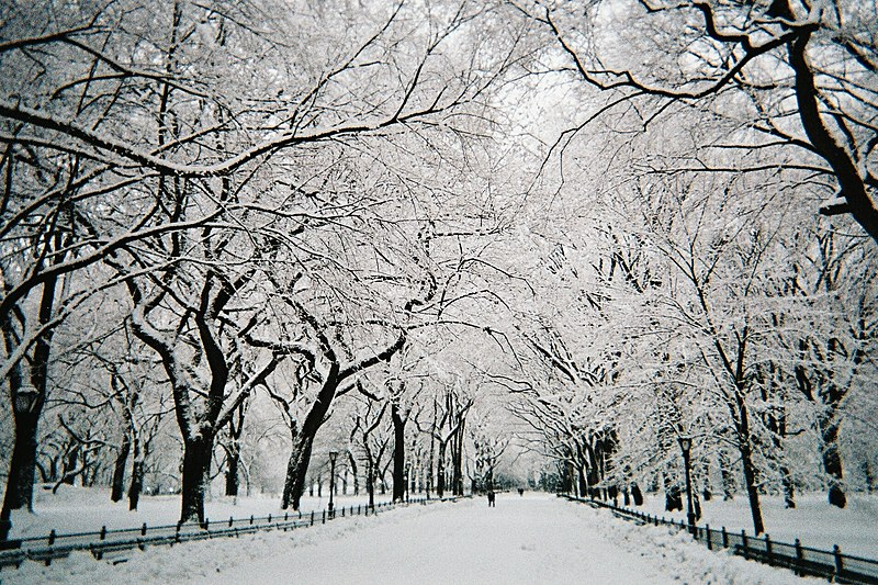 File:Central Park walkway under snow, NYC, February 2010.jpg
