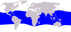 Description de l'image Cetacea_range_map_Melon-headed_Whale.PNG.