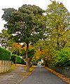 Chellow Lane, Allerton, Bradford (2958704905).jpg