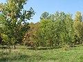 Cherkas'kyi district, Cherkas'ka oblast, Ukraine - panoramio (228).jpg