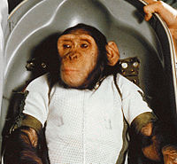 Chimpanzee Ham in Biopack Couch - cropped.jpg