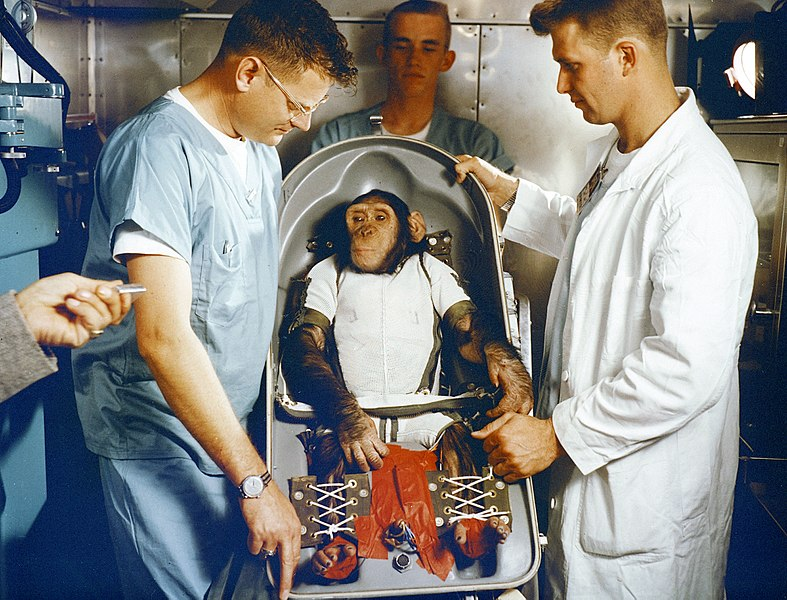File:Chimpanzee Ham in Biopack Couch for MR-2 flight MSFC-6100114.jpg