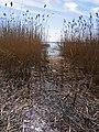 Chornobaivs'kyi district, Cherkas'ka oblast, Ukraine - panoramio (100).jpg
