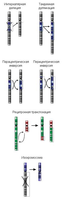 Некоторые типы хромосомных