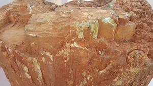 Fossil wood - Fossil wood from the Pliocene in Thirvakkarai, Tamil Nadu