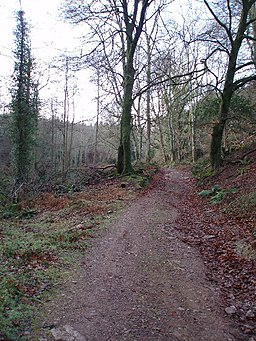Combe Sydenham Country Park - geograph.org.uk - 104573