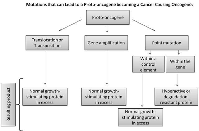 Flow Chart Template: Conversion of proto-oncogene flow chart.jpg - Wikimedia Commons,Chart