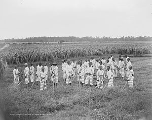 African-American Civil Rights Movement (1896–1954) - Juvenile African-American convicts working in the fields in a chain gang, photo taken c. 1903
