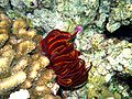 Corals seastar.JPG