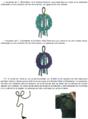 Cordón Acotaciones en Diplomado de OMDENA y comandante FAM.png