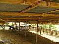 Corral para Ganado, Finca LOS COCOS, Siuna, RAAN, Nicaragua. - panoramio.jpg