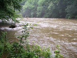 Cranberry River (West Virginia) - Cranberry River at the Woodbine Picnic Area after a heavy rain