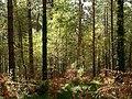 Creech Woods - geograph.org.uk - 1021953.jpg