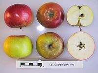 Cross section of Chataignier, National Fruit Collection (acc. 1947-165).jpg