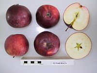 Cross section of Feltham Beauty, National Fruit Collection (acc. 1921-083).jpg