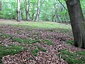 Cushion Moss - geograph.org.uk - 2501012.jpg