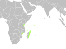 Map showing distribution of Cycas thouarsii: Madagascar, Comoros, Kenya, Tanzania and Mozambique