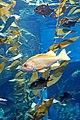 DSC08843 - Ripley's Aquarium (36823371580).jpg