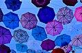 Dancing umbrellas (44570847881).jpg
