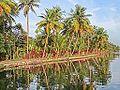 Dans les Backwaters (Kerala, Inde) (13719834484).jpg
