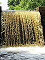 Davidson Mill Pond Park, South Brunswick, New Jersey USA July 15th, 2013 - panoramio (25).jpg
