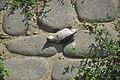 Dead sparrow in Nizhny Novgorod 01.jpg