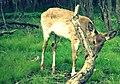 Deer (7004874802).jpg