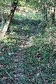 Deer Path.JPG