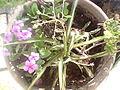 Defla fleur.jpg