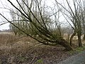 Deinze, Belgium - panoramio (6).jpg